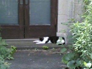 玄関先で伸びきる猫